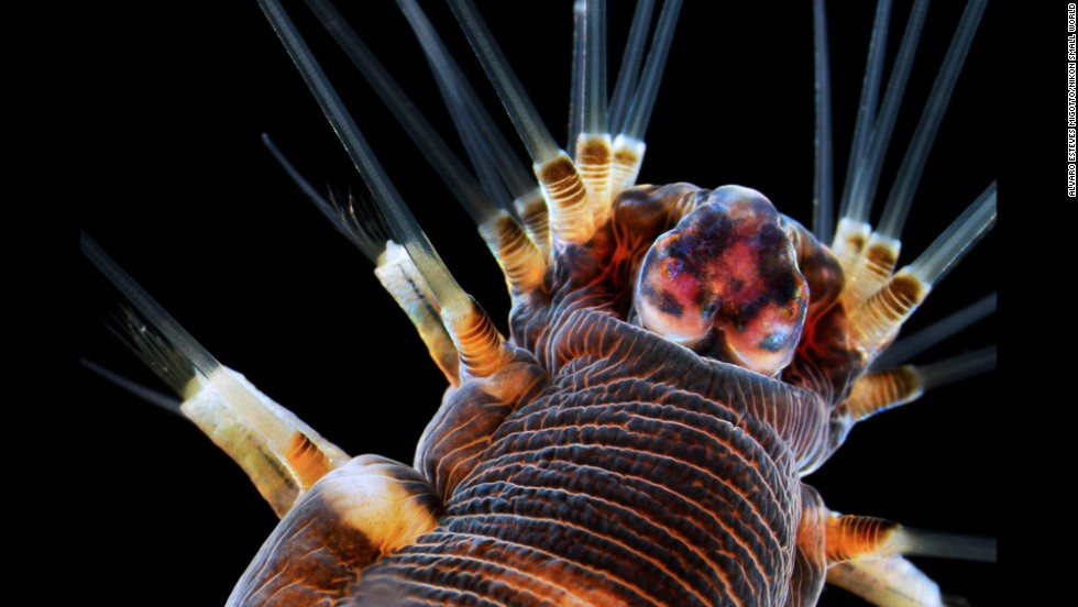 Dr. Alvaro Esteves Migotto; Universidade de São Paulo, Centro de Biologia Marinha; Marine worm