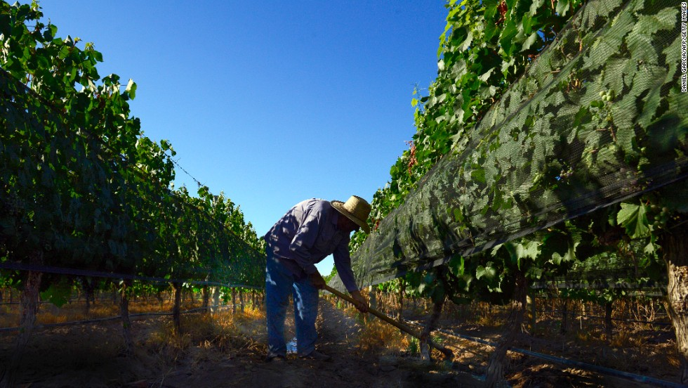 A man takes care of the vineyard at Joaquin Villanueva farm, part of the Luminis winery project in the district of Perdriel in Argentina.