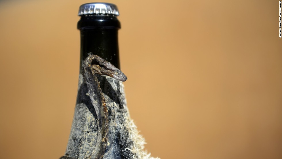 Other Old World producers are experimenting with their bottling techniques. A bottle of sparkling wine that was stored underwater -- and has a dead eel attached -- sits on a table in Chiavari, Italy.