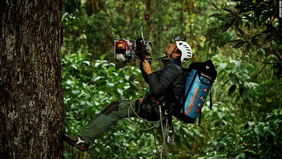 The climbers are using tree-friendly modern scaling techniques that involve a mechanical ascender which makes scaling easier and safer.