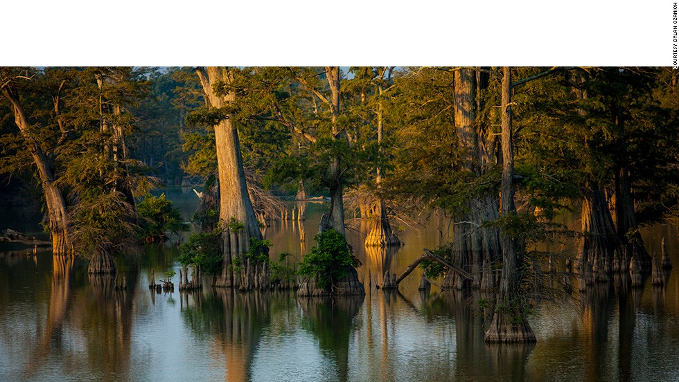 Along the journey, the vastness and diversity of the American landscape became apparent. This tree-filled lagoon is located in Sam Houston Jones State Park in Louisiana.