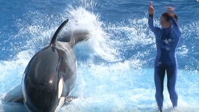 SeaWorld fights for its survival