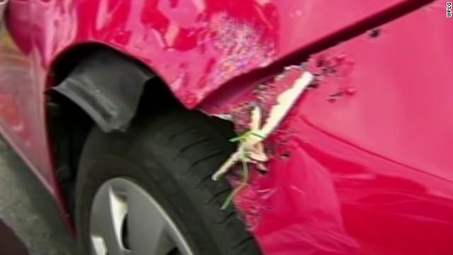 pkg pit bulls reportedly chew through car_00005811.jpg