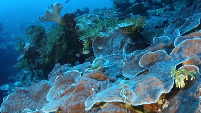 erin pkg carroll underwater wifi internet_00021510.jpg