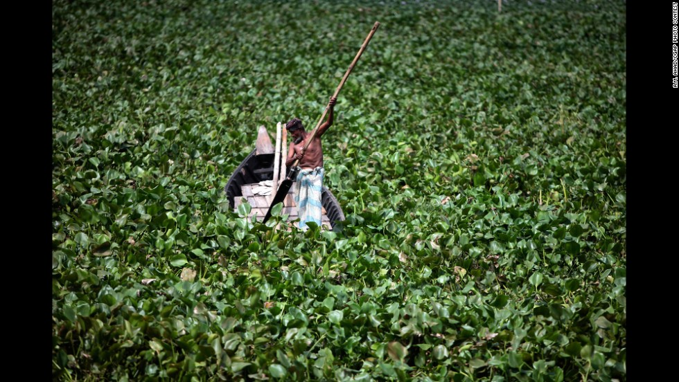Bangladeshi boat man tries to make his way from water hyacinth on Buriganga River in Dhaka, Bangladesh,.