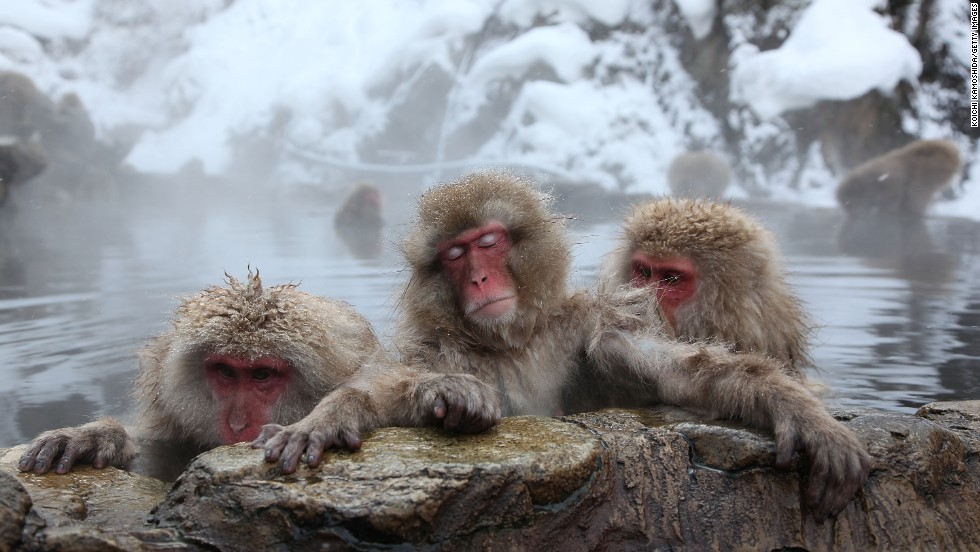 "Jigokudani Yaen-koen has it all -- steaming hot springs, beautiful snow-covered landscapes and impossibly cute (and snow-covered) monkeys. <strong>More: <a href=""http://travel.cnn.com/gallery-latest-photographs-wild-snow-monkeys-hell-valley-844591""><strong></strong>Gratuitous photos of monkeys in hot springs </a></strong>"