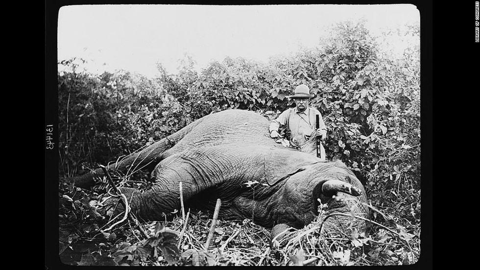 """Theodore Roosevelt, possibly the most famous sportsman to occupy the White House, continued to hunt after leaving office. In 1909, with the backing of the Smithsonian Institution, Roosevelt went on <a href=""""http://www.theodoreroosevelt.org/site/c.elKSIdOWIiJ8H/b.8344379/k.2B69/The_HUNTER.htm"""" target=""""_blank"""">a yearlong safari</a> that killed or trapped more than 11,000 animals."""