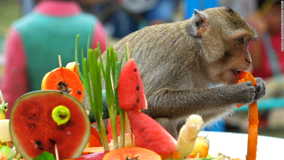 "Thailand's annual ""monkey buffet"" took place on Sunday, giving hundreds of long-tailed macaques a chance to gorge on over 2,000 kilograms of goodies. The popular event takes place every year in the town of Lopburi, 150 kilometers north of Bangkok."