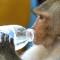 09 Lopburi Monkey Buffet