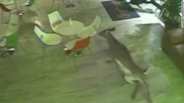 Deer bursts into shop, scares owners