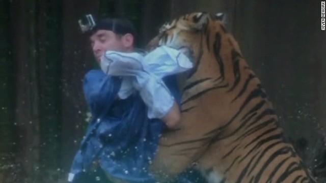 pkg tiger bites trainer _00000127.jpg