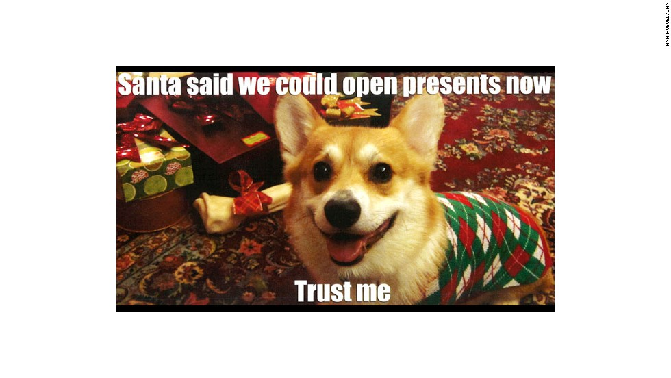 CNN producer Ann Hoevel and Dan Campbell sent out this photo of their convincing corgi, Belvedere, for the 2012 holiday season.