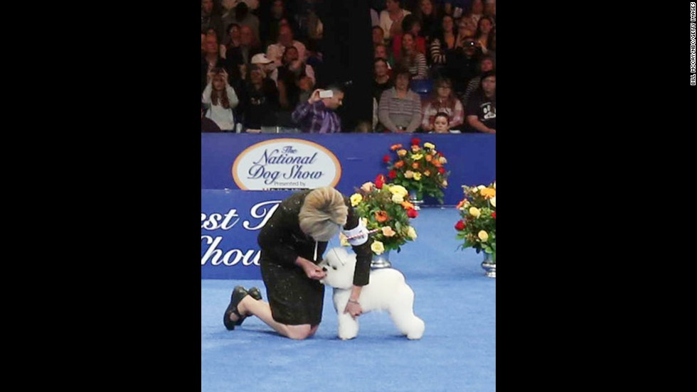 A bichon frise named Honor came out in the lead in the nonsporting group.