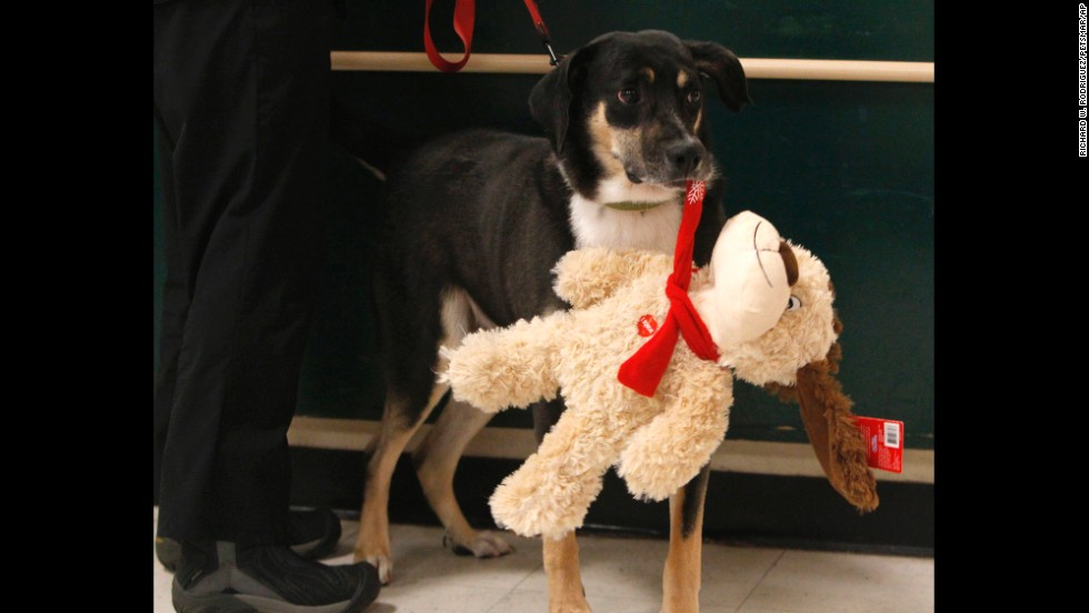 Comet carries a Luv-A-Pet plush toy at a Dallas PetSmart on November 29. Part of the proceeds from PetSmart's Luv-A-Pet toy purchases go to PetSmart Charities.