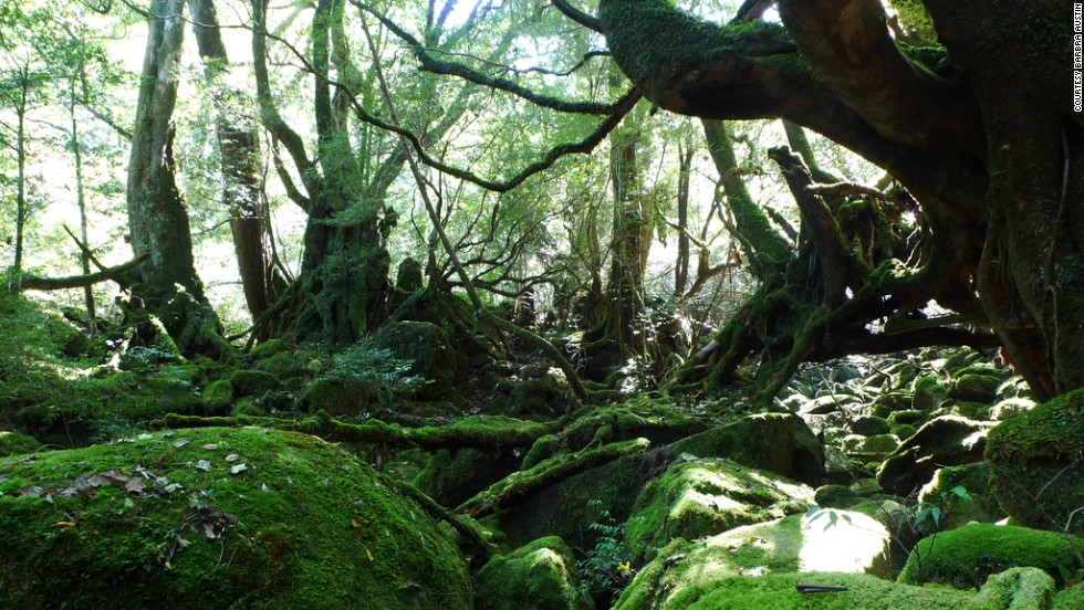 Off the southern coast of Kyushu, Yakushima offers visitors ancient forests and mountains that look straight out of a magical Studio Ghibli production. The oldest ceder tree on the island is thought to be over 7,000 years old.