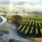 wine farms - weltevrede