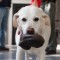 charleston dog 2