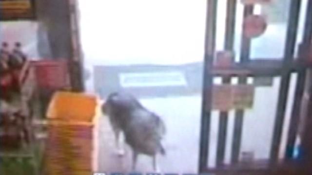 DNT SC shoplifting dog_00004920.jpg