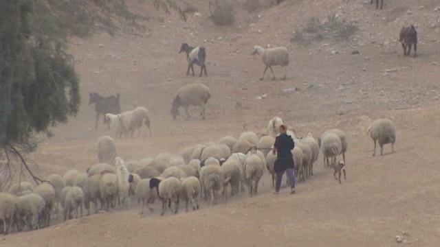 lee israel resettling bedouin _00000828.jpg