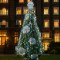Christmas trees - goring hotel london