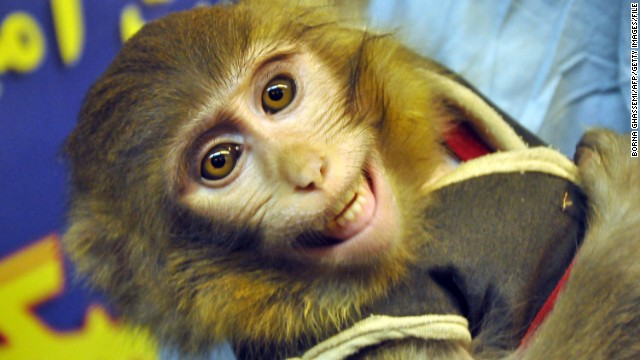This is the second time Iran has sent a monkey to space. The first one, pictured, was sent to space earlier this year.