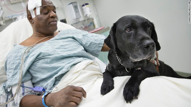 Cecil Williams pets his guide dog Orlando following a fall onto subway tracks from the platform, Tuesday in New York.