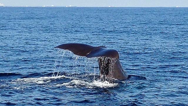 cnnee hurtado ca whale migration_00024517.jpg