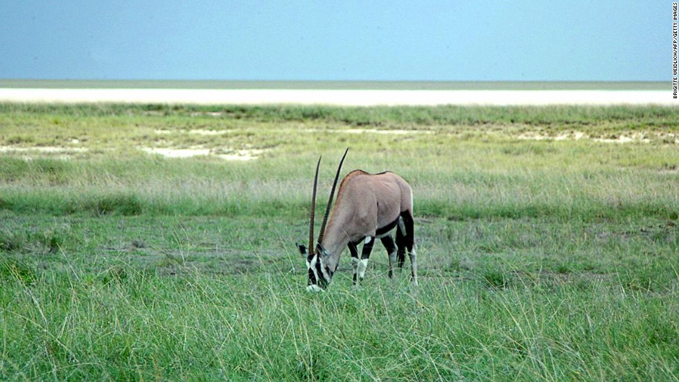 For wildlife, visit Namibia's Etosha National Park.