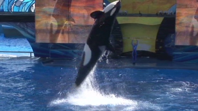 Did SeaWorld rig 'Blackfish' poll?