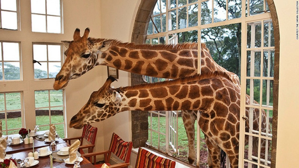 """Would you be so kind as to pass the marmalade?"" Eating breakfast with giraffes at Nairobi's 10-suite Giraffe Manor is a unique thrill."