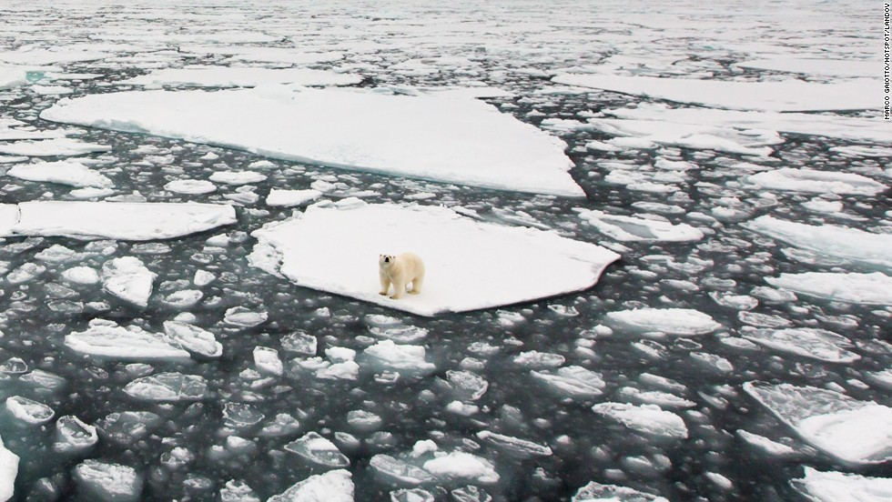 <strong>December 21: </strong>An isolated polar bear searches for seals in the Arctic Ocean.