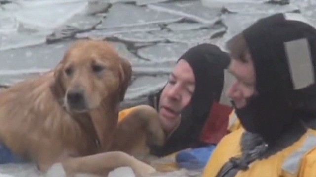 dog saved from river Newday _00001906.jpg