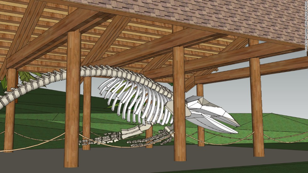 "While Alaska is already a world-class destination for whale watching, it's going to get even better in 2014. The skeleton of Snow, a humpback whale who visited Glacier Bay regularly when alive, is scheduled to go on display at <a href=""http://www.nps.gov/glba/naturescience/whale-68-articulation-project.htm"" target=""_blank"">Glacier Bay National Park & Preserve</a> in summer 2014. One of the world's largest reconstructed humpback whale skeletons, Snow will be displayed in a new outdoor exhibit in Bartlett Cove. The effort to preserve and display Snow's skeleton was led by park staff and local residents over 13 years.<br />"