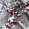 02 winter weather 1226