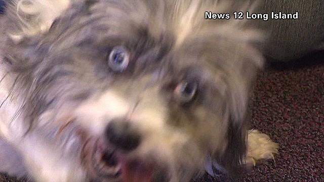 clip NY Dumpster Dog_00000518.jpg