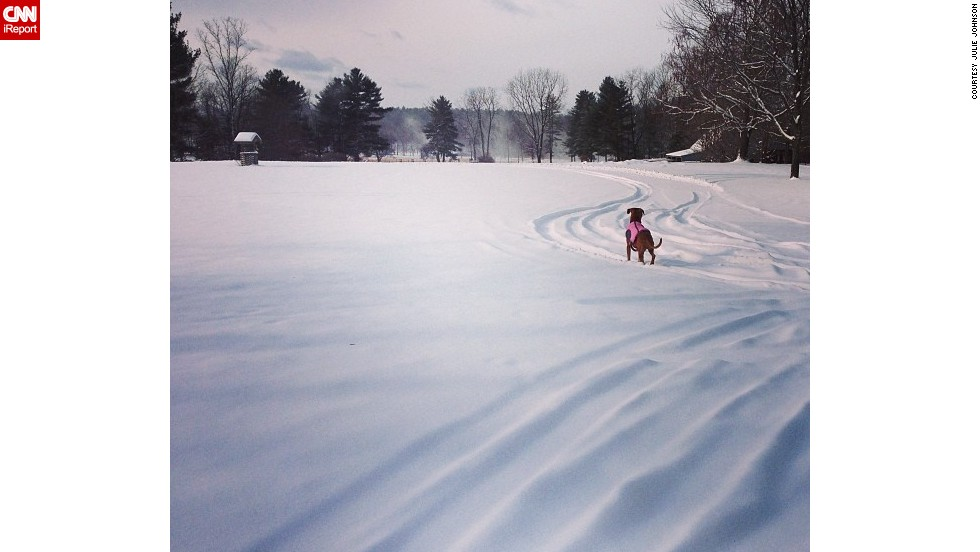 "<a href=""http://ireport.cnn.com/docs/DOC-1072201"">Julie Johnson</a> and her dog, Kaiah, enjoyed a snow day in the Berkshires on Friday. She photographed Kaiah staring off into snow, which blanketed Great Pine Farm in Great Barrington, Massachusetts."