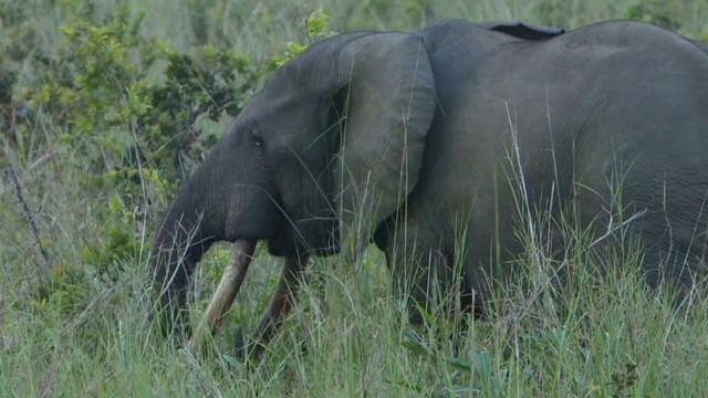 pkg damon elephant poachers_00020721.jpg