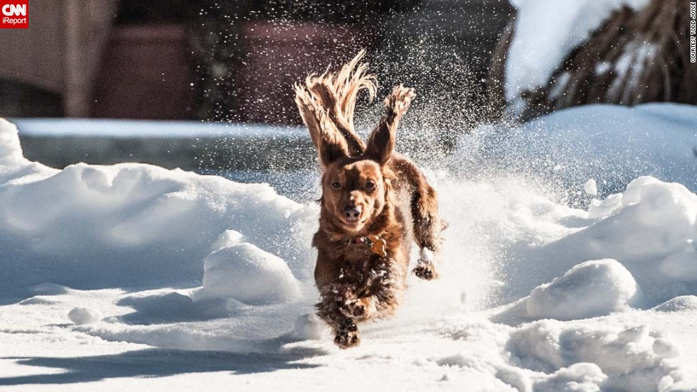 "A massive snowstorm that affected nearly a third of the nation left many people not wanting to leave their homes. But countless dogs, like <a href=""http://ireport.cnn.com/docs/DOC-1072983"">Todd Joyce's</a> pup Ginger, couldn't resist playing in the snow. Here's Ginger on a brief excursion in their snowy neighborhood of Lebanon, Ohio."