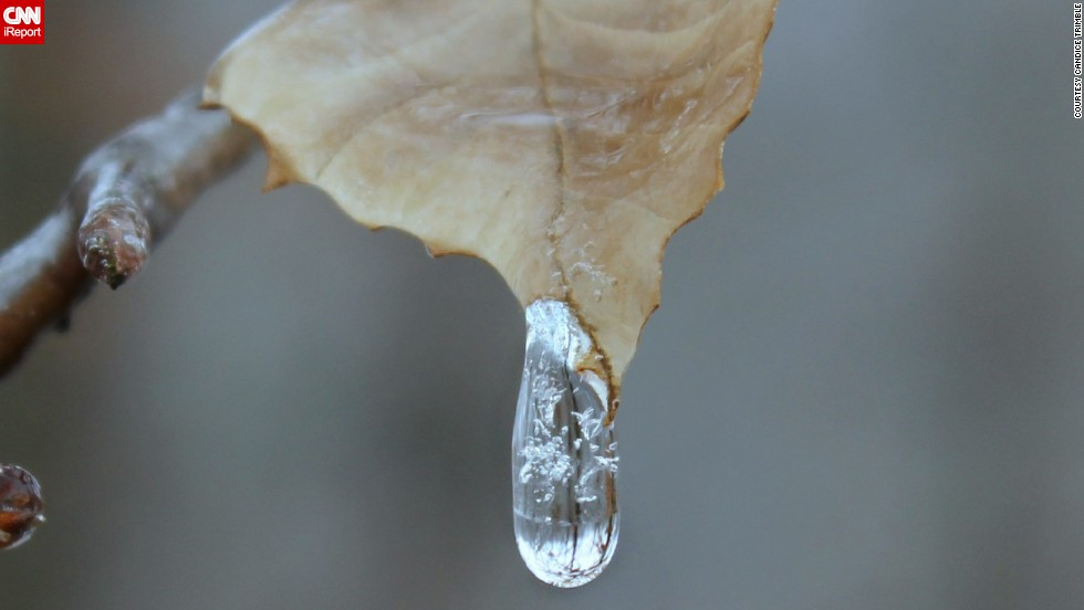 Nature photographer Candice Trimble bundled up in layers to snap some shots of the frozen conditions outside her home in Front Royal, Virginia, on Sunday, January 5.  She watched this water hit the leaf and then completely freeze.