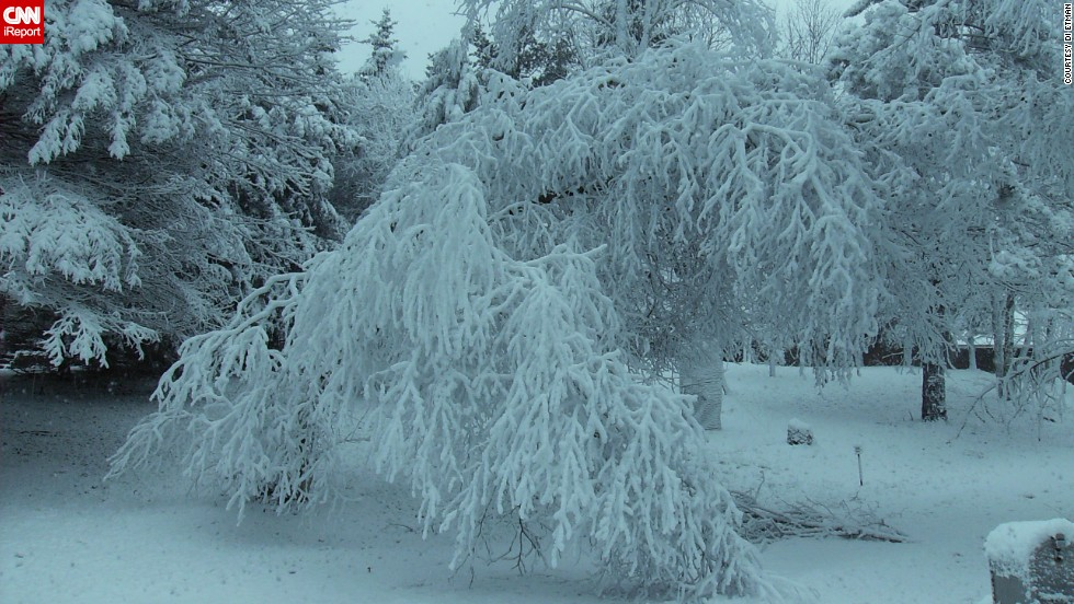Trees are weighed down with snow in the Long Lake area in Michigan on January 5.