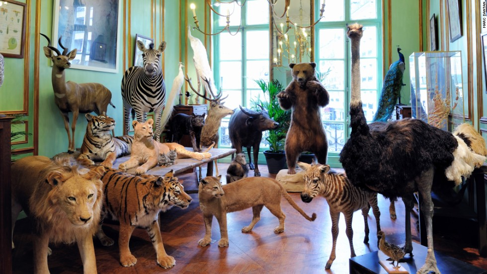Stuffing all creatures great and small since 1831, the exotic Paris taxidermist Deyrolle is owned by a prince -- Louis Albert de Broglie.