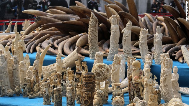 Ivory is displayed before being crushed during a public event in Dongguan, Guangdong province on January 6, 2014.