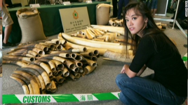 fighting illegal ivory trade china sharon kwok_00015304.jpg