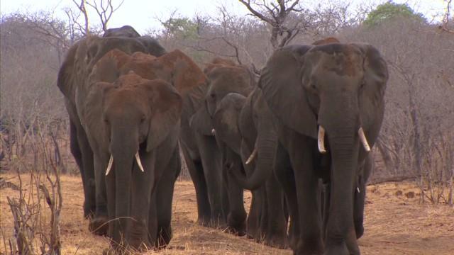 spc inside africa elephants botswana a_00002118.jpg