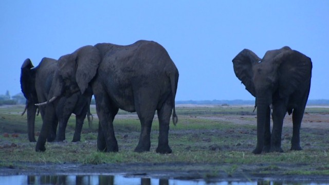 spc inside africa elephants botswana b_00054430.jpg
