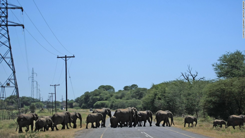 """""""There are a high number of accidents each year,"""" says Tempe Adams, who monitors the movement of animals in Kasane."""