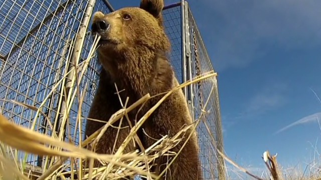 erin dnt cabrera simpsons creator simon bear rescue_00015709.jpg