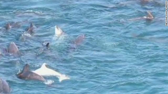 LEAD psihoyos cove dolphins documentary_00001723.jpg