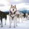 05 winter animals