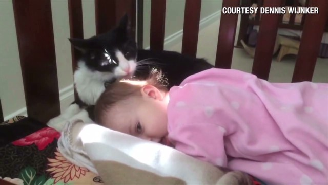 orig distraction kitty cleaning toddler_00001529.jpg